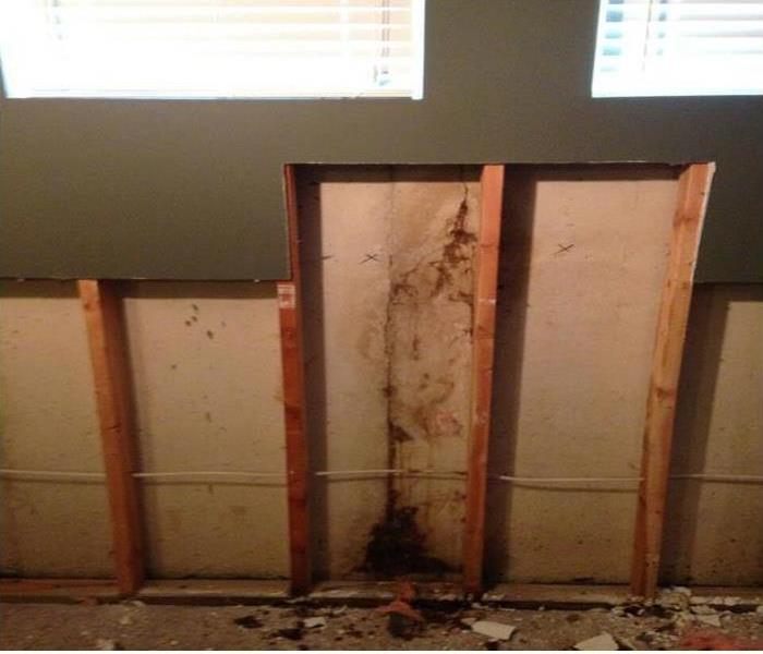 Mold and Moisture Go Hand-in-Hand in Chicago