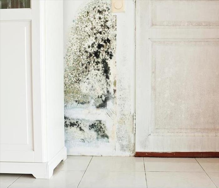 Mold Remediation How We Clean Up Mold Damage in Your Chicago Home