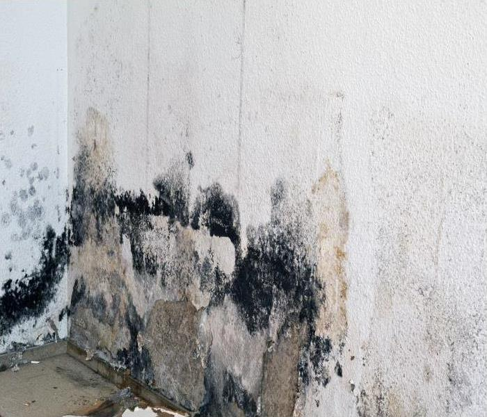 Mold Remediation Signs Every Renter In Chicago Needs To Know About Mold Damage In Their Apartment