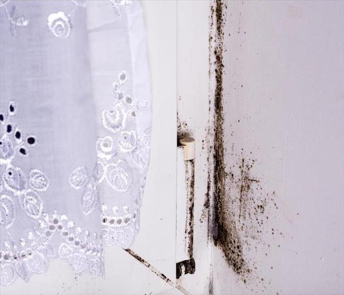 Mold Remediation Some Ways to Keep a Mold Infestation From Spreading Throughout Your Chicago Home