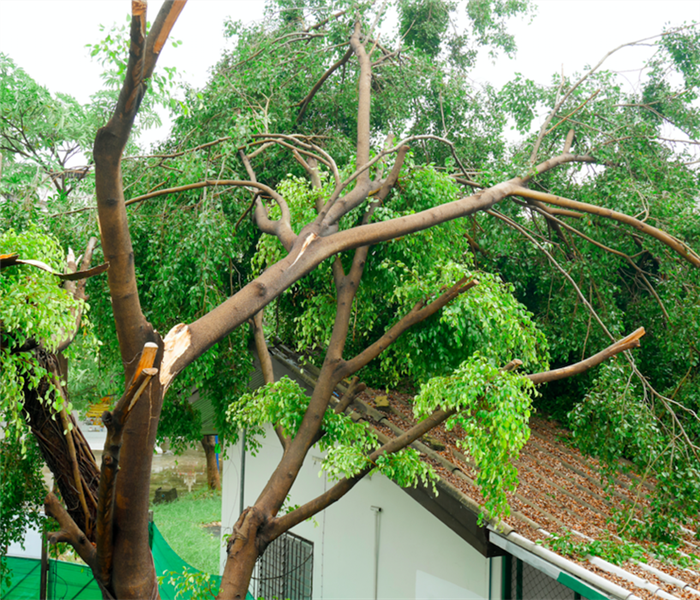 Tree fallen over on roof after severe windstorm.