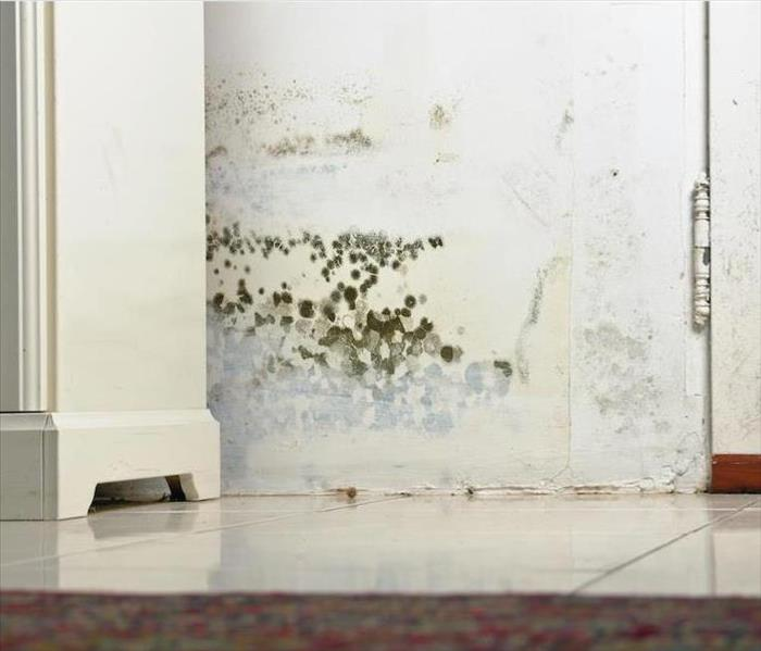 Mold Remediation How is Mold Damage Remedied by Professionals in Your Chicago Home?